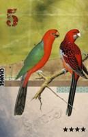 Birds Fine Art Print