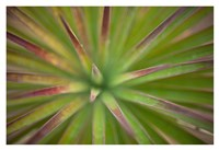 Arizona Monocot Fine Art Print