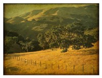 Oak and Fence Fine Art Print