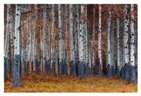 Autumn Forest Fine Art Print