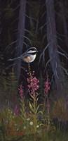 Fireweed Chickadee Fine Art Print
