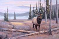 Meadowsong Fine Art Print