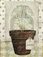 Herb Pot Lavender Framed Print