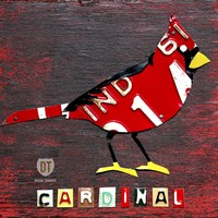Indiana Cardinal Framed Print
