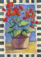 Geraniums Fine Art Print