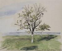 Honfleur, Garden With Two Fruit Trees, Seaside, 1864 Fine Art Print