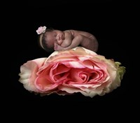 Peterson Martha Compressed Rose Fine Art Print