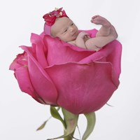 Hovey Single Rose Framed Print