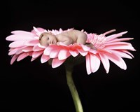 Parker Crystal Daisy Baby Framed Print