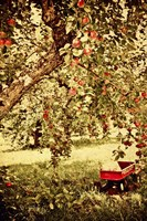 Apple Picking Fine Art Print