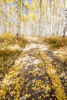 Road To Fall Fine Art Print