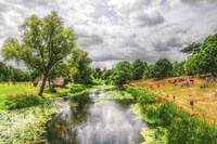 River Scene Fine Art Print