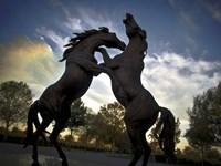 Stallions Fine Art Print