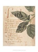 Herb Study I Fine Art Print