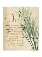 Herb Study II Framed Print