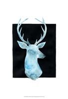 White Tail Bust I Framed Print