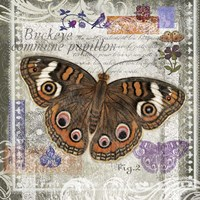 Butterfly Artifact II Fine Art Print