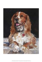 Jack English Cocker Spaniel Fine Art Print