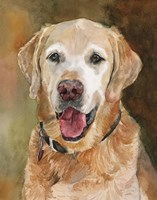 Rex Golden Retriever Fine Art Print