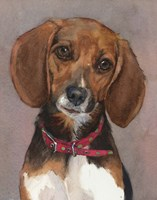 Lucy English Pocket Beagle Fine Art Print