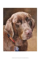Bell Chocolate Lab Fine Art Print