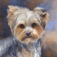 Sadie Belle Yorkshire Terrier Fine Art Print
