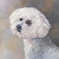 Wee Willie Maltipoo Fine Art Print
