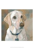 Kaley Yellow Lab Fine Art Print