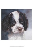Minnie Springer Spaniel Fine Art Print