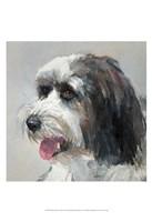 Harlan Tibetan Terrier Fine Art Print