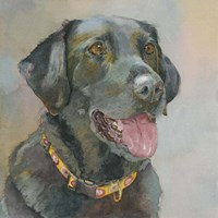 Harper Black Lab Fine Art Print