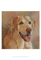 Calie Yellow Lab Fine Art Print