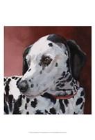 Chloe Dalmatian Fine Art Print