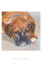 Baillie Boxer Fine Art Print