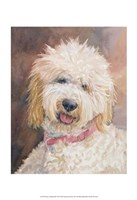 Honey Goldendoodle Fine Art Print