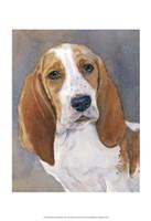 Waylon Bassett Hound Fine Art Print