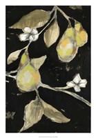 Fresh Pears II Framed Print