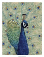 Blue Peacock I Fine Art Print