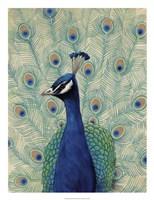 Blue Peacock II Framed Print