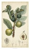Exotic Fruits I Fine Art Print