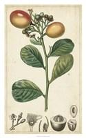 Exotic Fruits II Fine Art Print