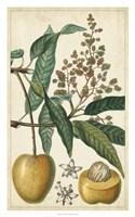 Exotic Fruits III Fine Art Print