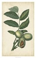 Exotic Fruits IV Fine Art Print