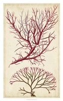 Turpin Seaweed V Fine Art Print