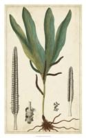 Foliage Botanique II Framed Print