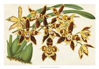 Graceful Orchids I Fine Art Print
