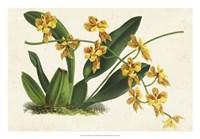 Graceful Orchids III Fine Art Print