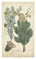 Weinmann Conifers III Fine Art Print