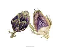 Watercolor Artichoke Fine Art Print