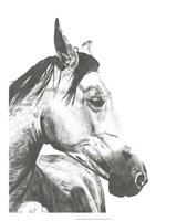 Wildlife Snapshot: Horse II Framed Print